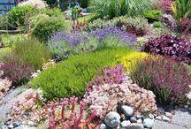 CO Perennials / #Colorado #gardening drought resistant perennials