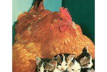 Adoráveis Animais
