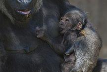 Doğada annelik...