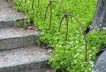 Hem och trädgård