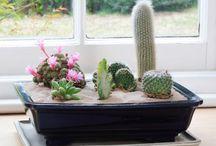 cacti desert garden