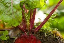 garden delights for dina / by Gratitude Attitude