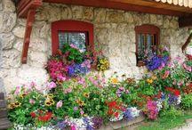 Garden Ideas / by Donna Surma Malendowski