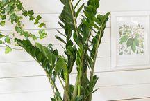 Plantes d intérieur