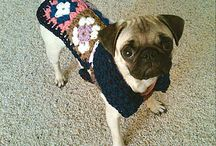 Princess Peach - the Pug / Adorable pictures of my and my husband's new pug, Princess Peach! / by HiLLjO