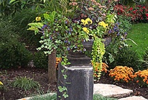 Amazing Patio Pot Combos / Container gardens can be works of art!