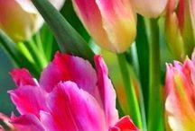 Çiçek Tasarım / Flowers Çiçek