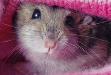 Happy hamsters