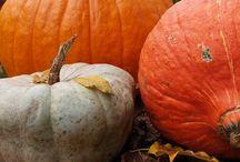 Pumpkins / by Karen Hamilton