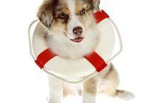 Pet Safety / by Splash Pet Shampoo