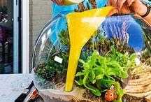 zalévání rostlin ve skle