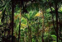 Amazonian Civilization