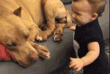 animals video funny