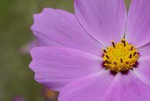 fotflor / fotos de flores tomadas por yo
