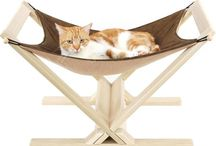 Cat Furniture / by Tami Stapp