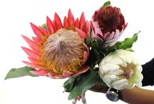 Silk By Design's flowers / Silk by Design is South Africa's foremost distributor of quality imported silk flowers, floral containers, glass vases, and accessories. Visit our website to learn more http://silkbydesign.co.za/