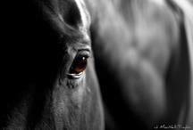 For the love of horses... / by Ivy Grisanti