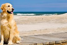 Breed Encyclopedia / Learn about different breeds