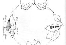 vývoj motýľa