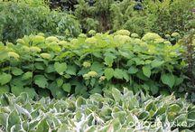 Ogród w Pęchcinie