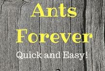 getting rid of f*#^@*$ ANTS