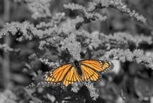 Orange  / by Kelly