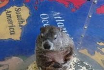 Worldwide Adventures of Phil / Worldwide Adventures of Phil Photo Competition! Free to participate! For More information go to: http://www.groundhog.org/groundhog-day/groundhog-news/single/article/2nd-annual-worldwide-adventures-of-phil-photo-competition/