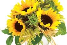 Sun Flower / ひまわり好き