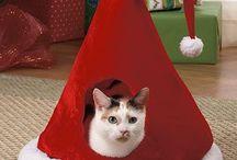 Kitty Christmas ideas