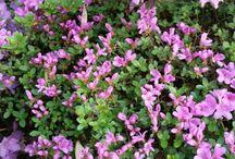 Květy různé