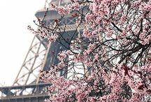 Primavera ♥️♥️
