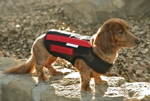 WiggleLess Dog Back Brace Family and Friends / When used as directed, the vet-recommended and patented WiggleLess® dog back brace is designed to offer back stability, firm support and stress relief for your dog.
