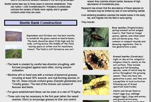 Ecological pest control research