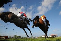 A day at the races / by Horse Racing Ireland - goracing.ie