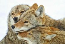 Wolves&Hounds