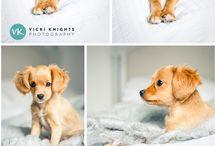 kutya fotók