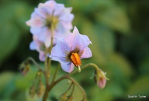 The Ache Oasis Garden / Beauty blooming in Sebastopol, California.  / by Guayaki Yerba Mate