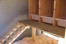 chicken coop ideas / by Joy Durfey