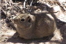 Chilean Wildlife / Es sorprendente durante cuánto tiempo creen los hombres en la ausencia de fondo de una laguna sin tomarse la molestia de sondearla. -- H.D. Thoreau, La laguna en invierno, Walden