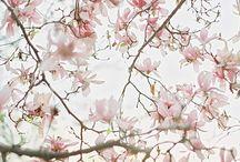 shooting inspi printemps japonais