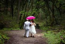 Redwood Forest weddings / by Rebecca Stark