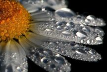Digital Nature / A variety of beautifully designed photos of nature resulting in the best nature digital photography.