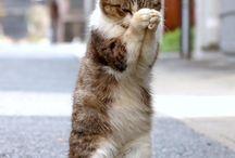 猫ฅ(=・ω・=)ฅ