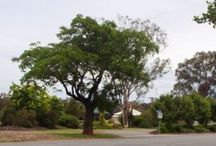 Marrar / Come and visit Marrar . . .  Authentic bush charm and heritage features make Marrar an intriguing place to visit. Learn about the village's history, discover the secrets of the old cemetery or enjoy a picnic in the park.