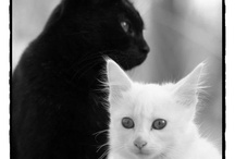 Black and white!