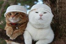 cute cat in the world