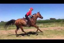 caballos endurance horses