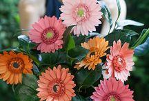 Flowers patterns  - Πατρόν για λουλούδια