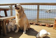 Pier-Side Pooches