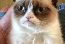 Grumpy Cat Awesomeness